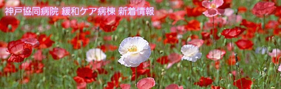 神戸協同病院 緩和ケア病棟 新着情報